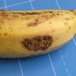 バナナに焼印2