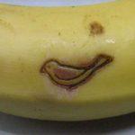 小さな鳥の焼印をバナナに2
